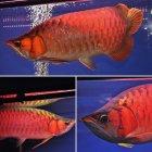 他の写真2: NWES red