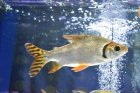 他の写真2: カラープロキロダス
